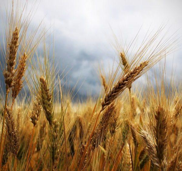 La sfida del clima si vince anche cambiando la Politica agricola comune
