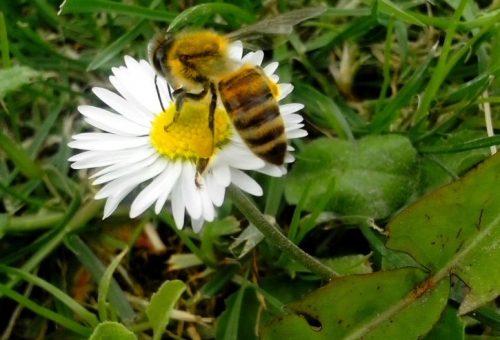 Let it bee. Lasciamo stare le api!
