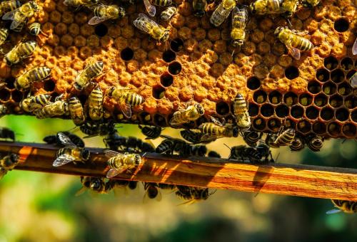 L'Europa salvi le api dall'armageddon ecologico