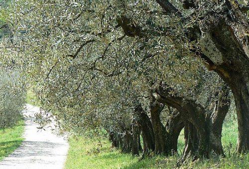 Guida agli Extravergini – Le regioni del centro Italia