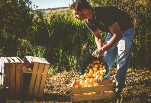 La Pac che vogliamo. Parte il viaggio di Slow Food tra i produttori europei