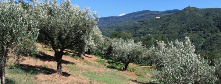 campagna olivicola 2020