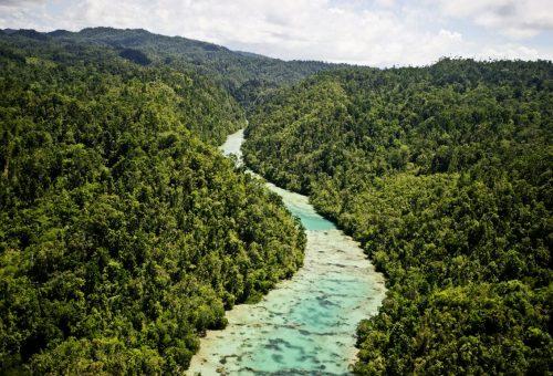Olio di palma, abbattuta anche l'ultima frontiera: inizia la deforestazione dell'isola di Papua