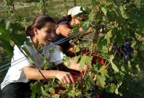 Agricoltura eroica: un premio per i giovani che resistono
