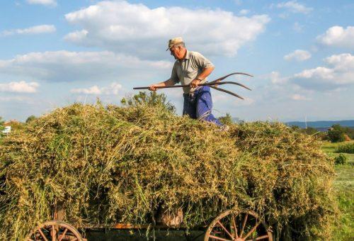 Verso la nuova Pac: come rendere il sistema di produzione alimentare europeo più sostenibile dal punto di vista ambientale e sociale