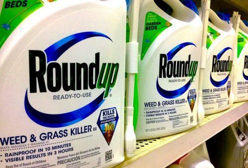 Glifosato, l'erbicida Roundup causa il cancro: storica sentenza contro Monsanto negli Usa