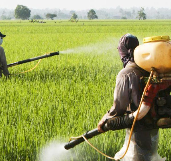 Servono ricette per una sana agricoltura