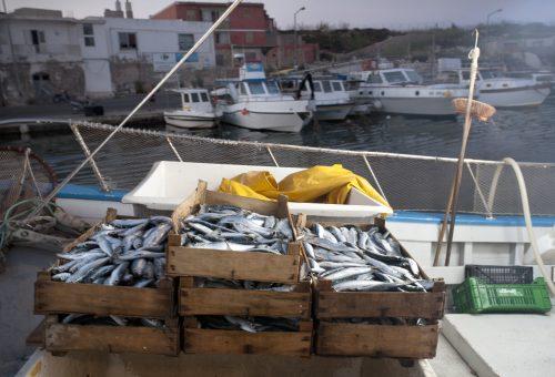 Vizi e virtù del pesce certificato