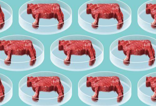 Carne, il futuro è in vitro?