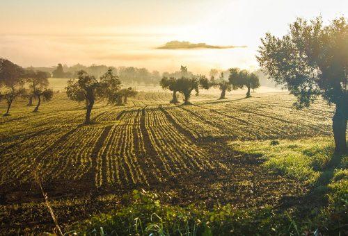Campagna olearia 2018: gli esperti Slow Food raccontano Toscana, Liguria e Lazio