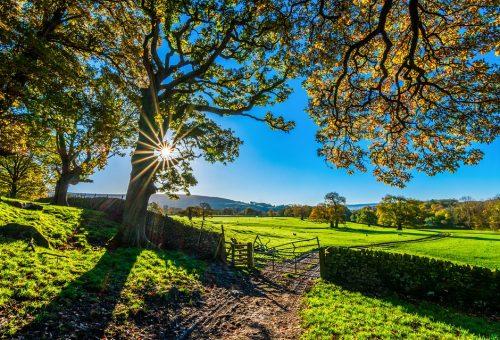 L'agroecologia che diventa movimento salva il pianeta