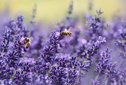 Non è fantascienza: con gli insetti sparisce la vita