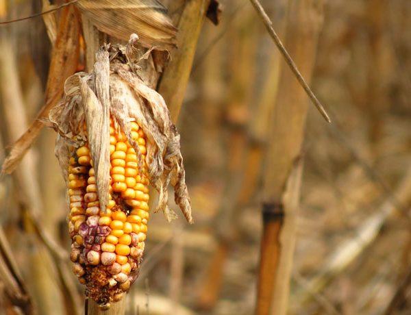 Food shocks: crescono le perdite di cibo dovute a eventi meteo