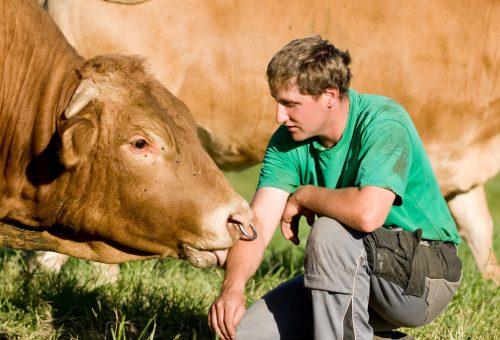 Cittadini all'Europa: basta fabbriche di carne, aprite le gabbie