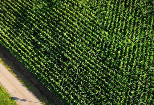L'agroindustria distrugge la biodiversità, e mette a rischio la nostra sopravvivenza
