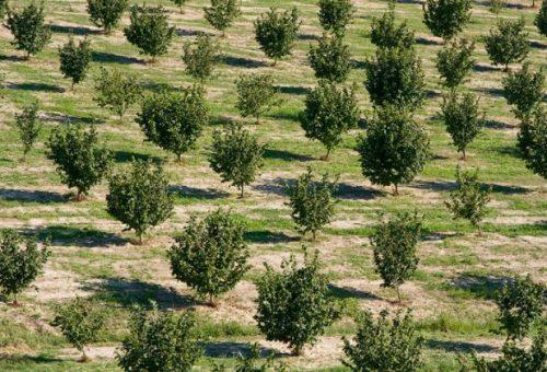 Dal prosecco alle nocciole: le monoculture distruggono il suolo
