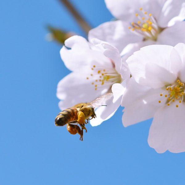 230.000 cittadini europei hanno chiesto di salvare le api: la politica risponda.