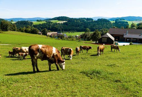 Europee: dimostriamo la volontà dell'Europa di salvaguardare l'interesse di cittadini, agricoltori e dell'ambiente.