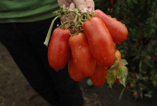 Mentre esplodono pesche e pomodori, occhio all'insalata. E che sia tutto caporalato free!