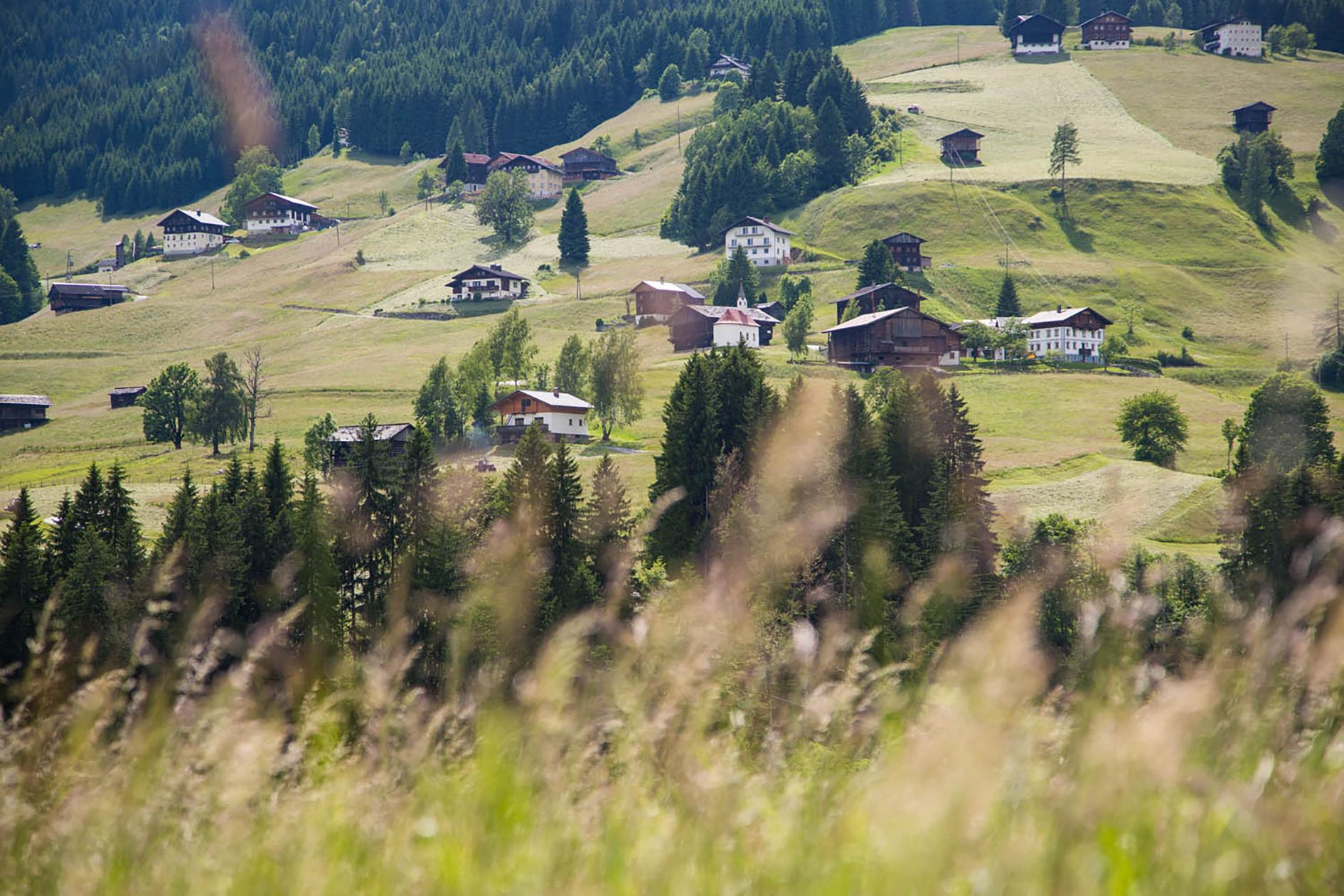 Buone notizie dall'Austria, glifosato