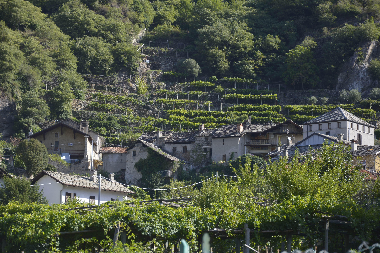 Il Nebbiolo Delle Terrazze A Un Passo Dalla Valle D Aosta
