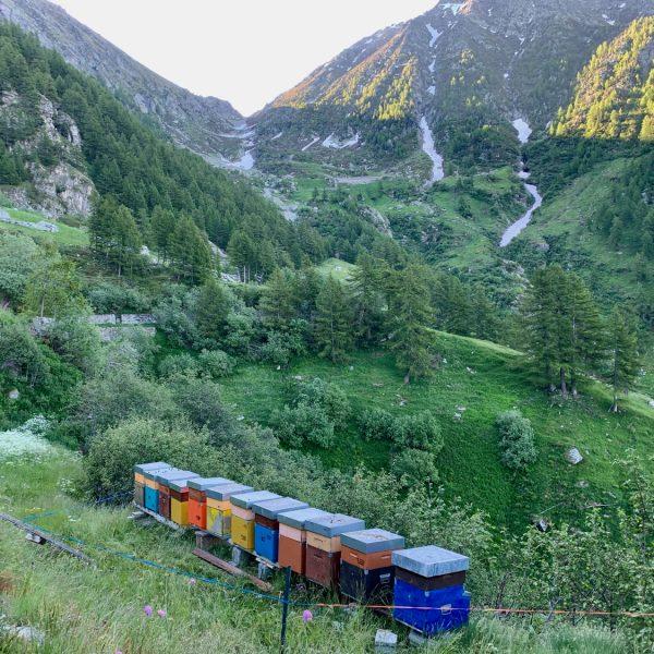 I sapori dell'estate: un cammino dove nascono i mieli d'alta montagna