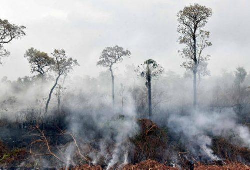 Brucia la foresta amazzonica, cronaca di una morte annunciata