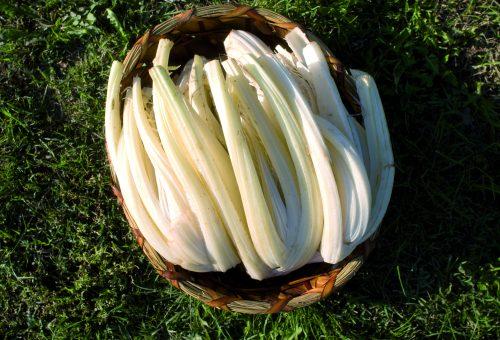 Il cardo gobbo con la granella di nocciole piemontesi: un abbinamento perfetto