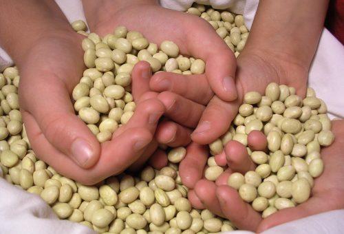 Meatless Monday presenta le ricette della tradizione: il fagiolo gialèt della Val Belluna con insalata di farro