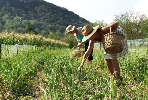 Sfamare tutti e salvare il pianeta? Serve arginare l'agricoltura intensiva