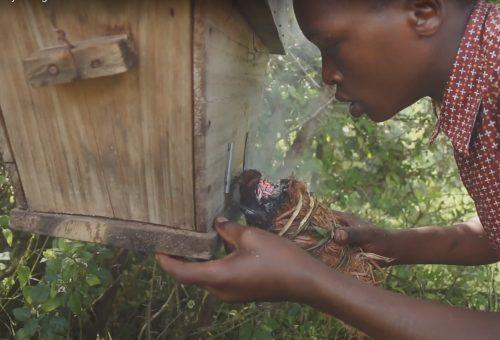 Ridiamo la foresta agli apicoltori! La storia degli Ogiek, popolo delle foreste