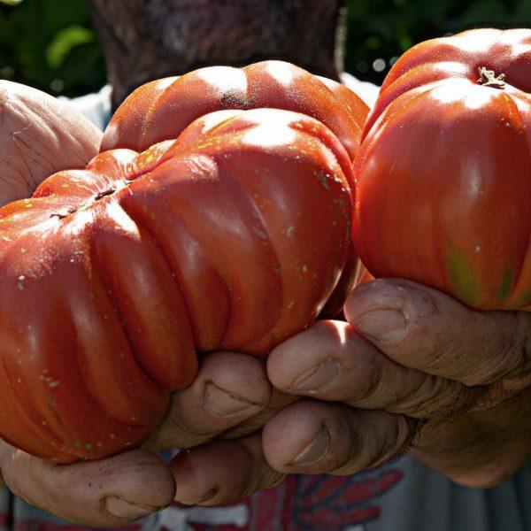 Pomodoro libero da caporalato: giro nell'Italia dei Presìdi Slow Food