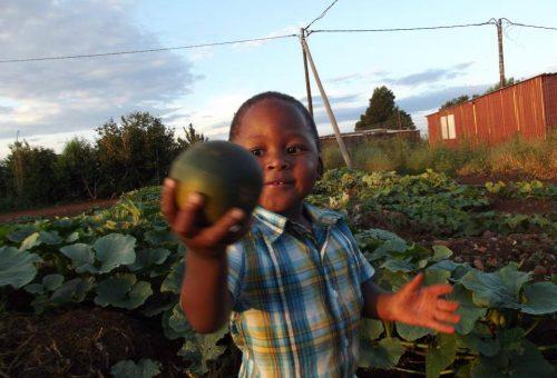 Il Covid-19 visto dall'Africa. E la risposta della rete Slow Food africana