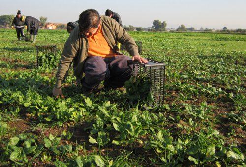 «Costruiamo un paese solidale ed equo». L'appello dal Forum Nazionale dell'Agricoltura Sociale
