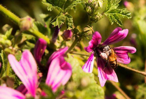 La transizione ecologica in agricoltura è l'unica via per salvare le api