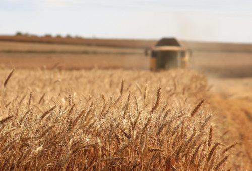 Tutto (ma proprio tutto) ciò che serve sapere sulla Politica agricola comune dell'Ue