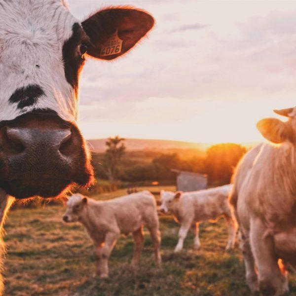 """La nuova strategia """"Farm to Fork"""", che cos'è e come funziona. Tutto quello che ogni cittadino europeo deve sapere"""