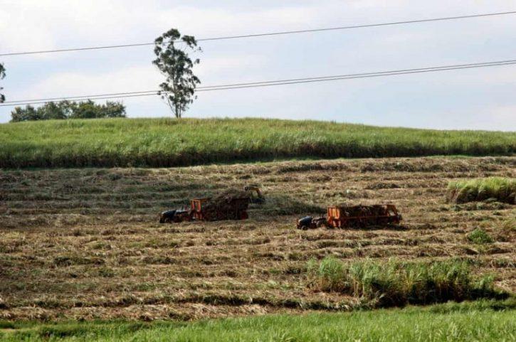 land grabbing uganda