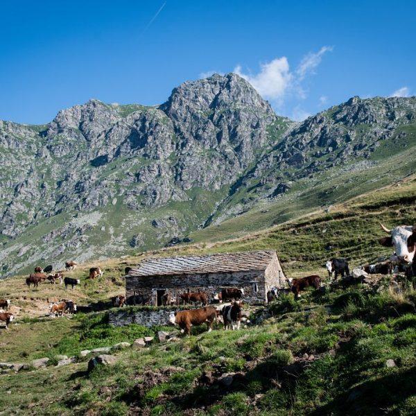 Slow Food Travel montagne biellesi: l'alternativa slow per le vostre vacanze